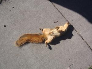 squirrel-tupai-bajing-4x3