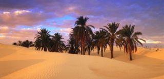 padang-pasir-dan-pohon-kurma-320x154